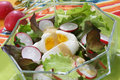 Free Fresh Summer Salad Stock Photos - 14576713