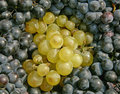 Free Clusters Of White And Black Grapes Stock Image - 14578001