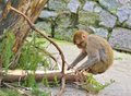Free Monkey Stock Photo - 14579190