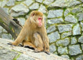 Free Sad Monkey Stock Photography - 14579202