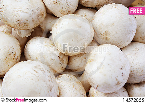 Free Group Of Mushrooms Royalty Free Stock Photo - 14572055