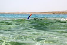 Free Snorkeling In Red Sea Royalty Free Stock Images - 14570449
