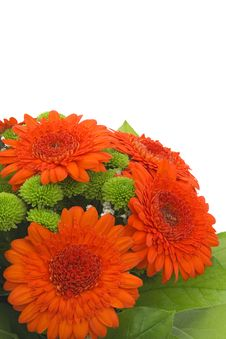 Free Bouquet Gerbera. Royalty Free Stock Photo - 14570625
