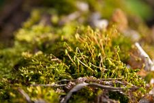 Free The Young Green Moss Stock Photo - 14571440