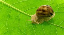 Free Snail Stock Image - 14576221