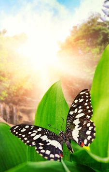 Free Butterfly Over Waterfall In Wild Forest Stock Photo - 14576660