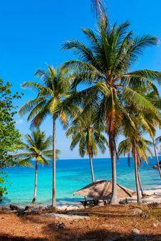 Free Palm Royalty Free Stock Photo - 14576775