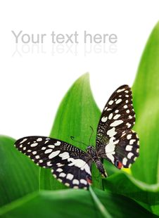 Free Butterfly On A Green Leaf Royalty Free Stock Photos - 14576828