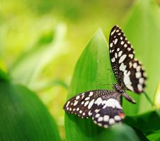 Free Butterfly On A Green Leaf Royalty Free Stock Photos - 14576898
