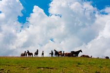Free Horses Stock Images - 14576944