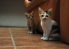 Free Little Kitten Stock Photography - 14577592