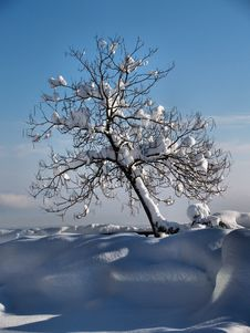 Free A Winter Tree Royalty Free Stock Photography - 14578087