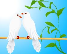Free Two Doves Royalty Free Stock Image - 14578226