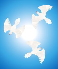 Free White Doves Stock Image - 14578231