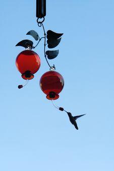Free HUMMINGBIRD FEEDDING Stock Photo - 14578490