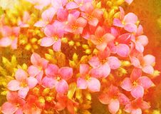 Free Vintage Styled Floral Picture Stock Photography - 14579302