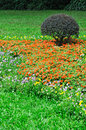 Free Bush And Flower Cluster In Garden Stock Photo - 14582930