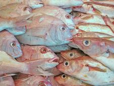 Free Fish Stock Photography - 14580232
