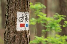 Free Bicycle Tree Sign Close Up Royalty Free Stock Photo - 14580625