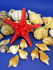 Free Red Star And Shells Royalty Free Stock Image - 14581146