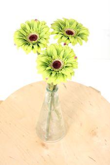Free Vased Green Flowers Royalty Free Stock Photo - 14581545