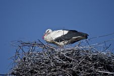 Free Storks In The Nest Stock Photos - 14581593