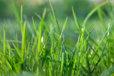 Free Green Grass Stock Photography - 14581692