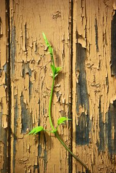 Free Young Sprout On Old Wood  Wall Background Stock Photos - 14581783