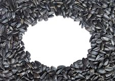 Free Oval Frame Made Of Sunflower Seeds. Isolated Royalty Free Stock Photos - 14581848