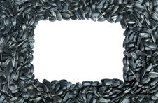 Free Square Frame Made Of Sunflower Seeds. Isolated Stock Photography - 14581862