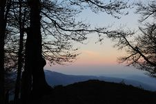 Silhouetted Tree In Mountains Stock Photography