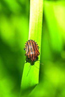 Free Bedbug On Leaf Stock Photo - 14582110
