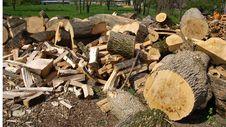 Free Freshly Cut FireWood Stock Image - 14583771