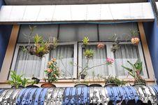 Free Glass Window Hang Pot Flower Stock Image - 14584681