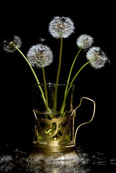 Cute Dandelions In The Glass Stock Photo