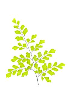 Free Branch With Leaves Royalty Free Stock Photo - 14585215