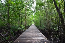 Wood Bridge In Mangrove National Park Stock Photos