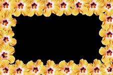 Free Flower Photo Frame Stock Photos - 14587163