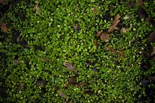 Free Petite Green Plants Ground With Leawes Stock Photo - 14589130