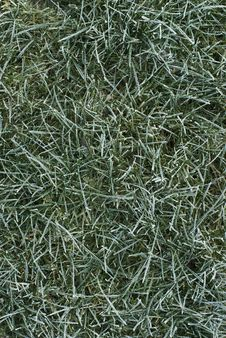 Free Frozen Grass Stock Image - 14589371