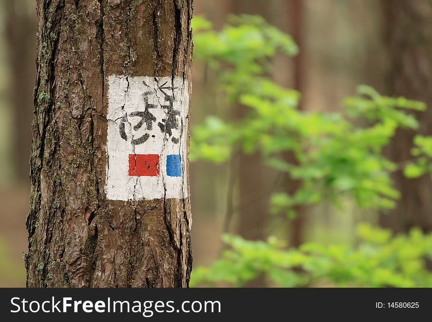 Bicycle tree sign close up