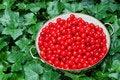 Free Freshly Picked Cherries Royalty Free Stock Photo - 14590105