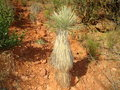 Free Sedona Park, Arizona. Just Nice Cactus. Royalty Free Stock Images - 14590629