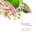 Free Bouquet Of Wild Flowers On A White Background Stock Images - 14592464
