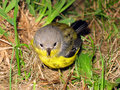 Free Bird In Grass Stock Photo - 14594440