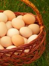 Free Eggs In The Basket Royalty Free Stock Photography - 14597897