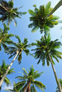 Free Coconut Trees On The Island Royalty Free Stock Photos - 14599798