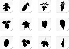 Free The Set Of Leaves Stock Photography - 14592432