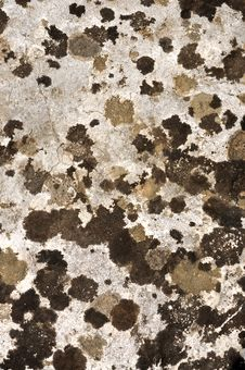 Free Lichen Texture On Stone Royalty Free Stock Photo - 14593115