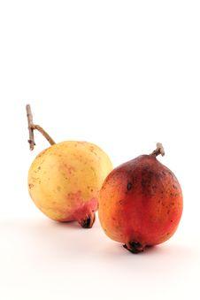 Free Pomegranate Stock Photo - 14595550